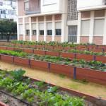 Huerto ecológico urbano